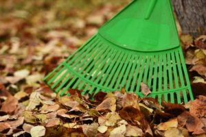 Fall setting with rake and leaves for yard waste disposal background